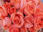 الصورة الرمزية زهور العبيرات